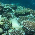 トミービーチ、深いドロップオフと見事な珊瑚群 -20190702