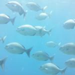 "<span class=""title"">魚群&クマノミ -20190715</span>"