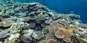 ドロップオフ珊瑚